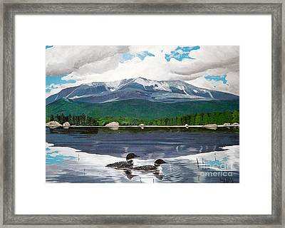 Common Loon On Togue Pond By Mount Katahdin Framed Print by Stella Sherman
