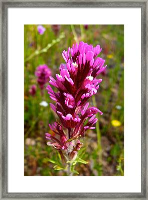 Common Owl's Clover In Park Sierra-ca Framed Print by Ruth Hager