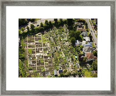 Community Garden P-patch, Seattle Framed Print by Andrew Buchanan/SLP