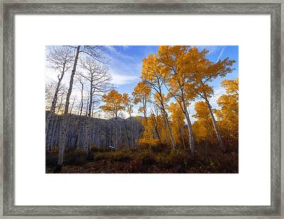 Comparison Framed Print by Chad Dutson