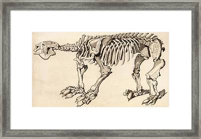 Composite Skeleton Of A Megatherium Framed Print by Universal History Archive/uig