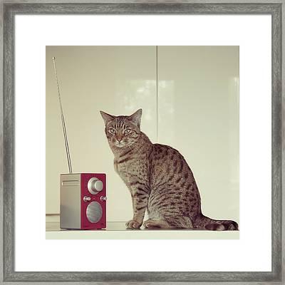 Concentrated Listener Framed Print by Ari Salmela