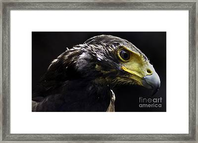 Concentration Framed Print by D C