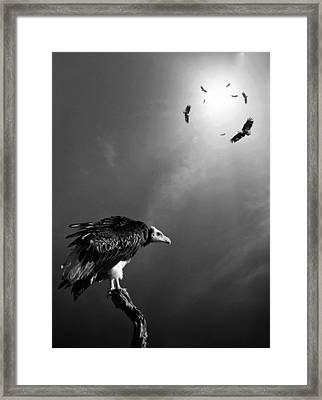 Conceptual - Vultures Awaiting Framed Print by Johan Swanepoel
