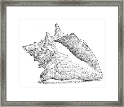 Conch Shell Framed Print by Christy Beckwith