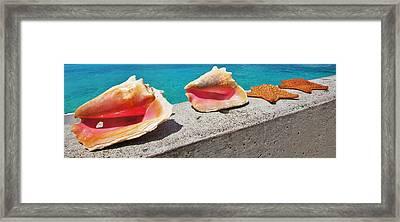 Concha Line Framed Print by DM Photography- Dan Mongosa