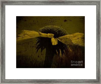 Cone Flower Bw Morning Dew Yellow Framed Print by Lesa Fine