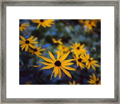 Cone Flowers Framed Print by Marcio Faustino