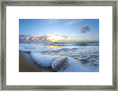 Cone Shell Foam Framed Print by Sean Davey