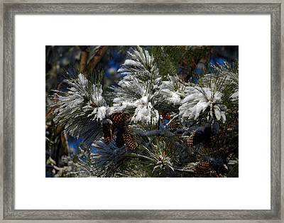 Cones Framed Print by Skip Willits