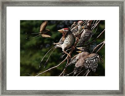 Confuciusornis Framed Print by Jaime Chirinos