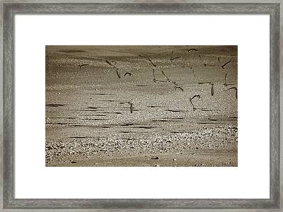 Confused Shadow  Framed Print by Mario Celzner