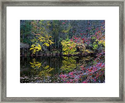Congaree Swamp Framed Print by Skip Willits