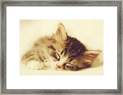 Content Kitty Framed Print by Pam  Holdsworth