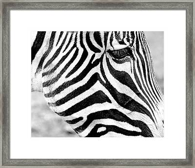 Contextual Patterns Framed Print by Trever Miller