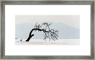 Contorted Tree At A Frozen Lake, Lake Framed Print by Panoramic Images