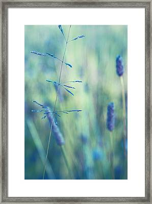 Contrario - S11a Framed Print by Variance Collections