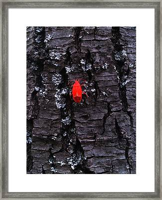 Contrasts Framed Print by Lucy D