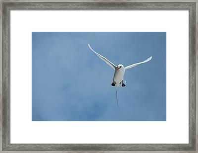 Cook Islands, Aitutaki, Honeymoon Island Framed Print by Cindy Miller Hopkins