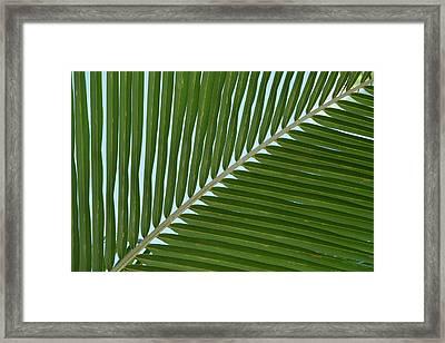 Cook Islands Palmerston Island Detail Framed Print by Cindy Miller Hopkins