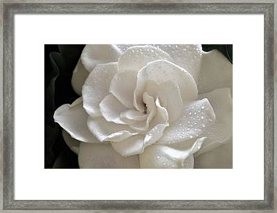 Cool Gardenia Framed Print by Terence Davis