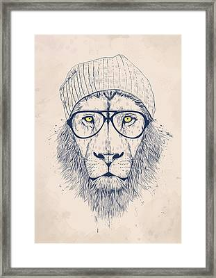 Cool Lion Framed Print by Balazs Solti