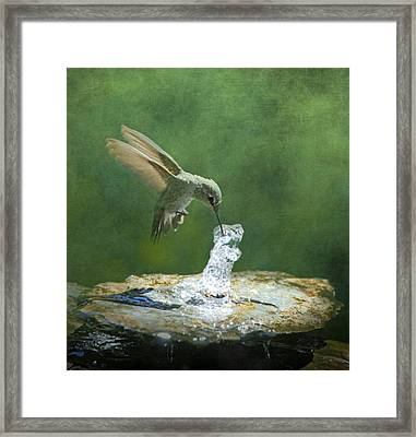 Cool Refreshment Framed Print by Angie Vogel