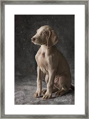 Cooper Framed Print by Dan Jurak