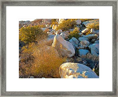 Cooper's Goldenbush In The Rocks Near Barker Dam In Joshua Tree Np-ca Framed Print by Ruth Hager
