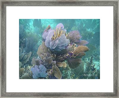 Coral Cluster Framed Print by Adam Jewell