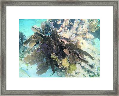 Coral Collage Framed Print by Adam Jewell
