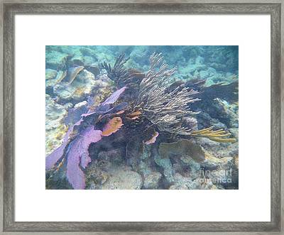 Coral Mix Framed Print by Adam Jewell