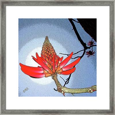 Coral Tree Framed Print by Ben and Raisa Gertsberg