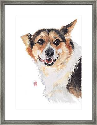 Corgi Glance Framed Print by Debra Jones