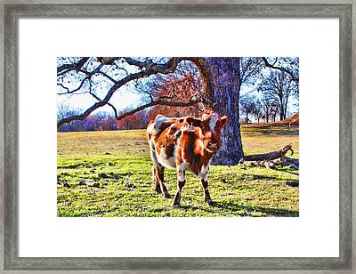 Corley's Cow Framed Print by Toni Hopper