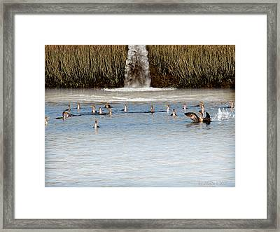 Cormorant Convention Framed Print by EricaMaxine  Price