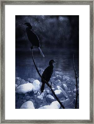 Cormorants At Dusk Framed Print by Kelly Gibson