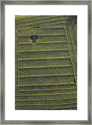 Corn Field, Chavagnes En Paillers Framed Print by Laurent Salomon