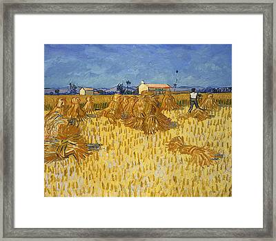 Corn Harvest In Provence Framed Print by Georgia Fowler