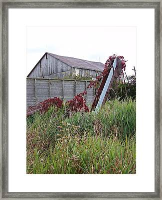 Corn Picker  Framed Print by Lisa Young