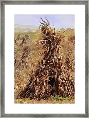 Corn Stalk Bales Framed Print by Marcia Colelli