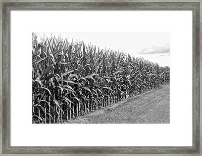 Cornfield Black And White Framed Print by Frozen in Time Fine Art Photography