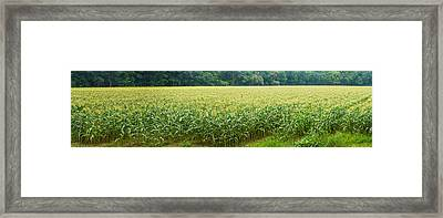 Cornfield, Cuyahoga Valley National Framed Print by Panoramic Images