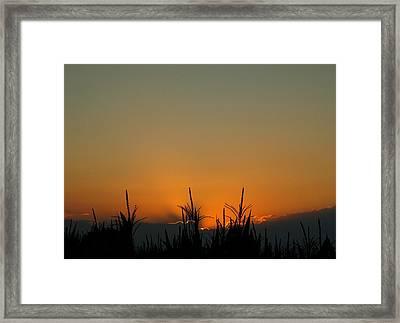 Cornfield Sunset Framed Print by Dan Sproul
