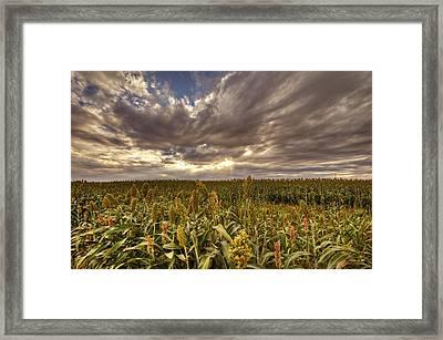 Cornfield Sunset  Framed Print by Saija  Lehtonen