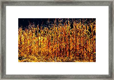 Cornrow 2 Framed Print by Brian Stevens
