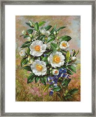 Coronation Camelia From The Golden Jubilee Series Framed Print by Albert Williams