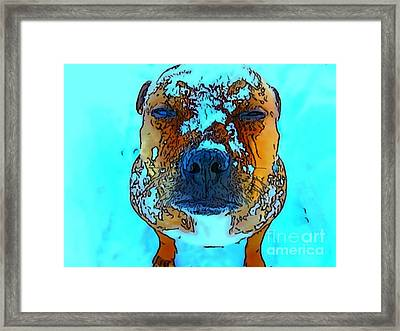 Cory Framed Print by Anne Sterling
