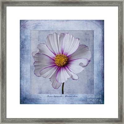 Cosmos With Textures Framed Print by John Edwards
