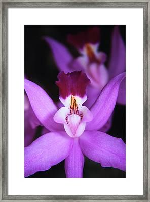 Costa Rica, Ankester Botanical Gardens Framed Print by Scott T. Smith